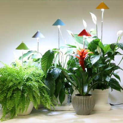 Sunlite taimevalgusti